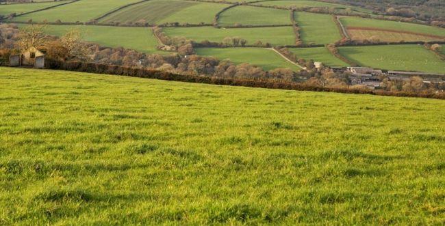 Вартість землі у селі біля Рівного зросла у п'ять разів