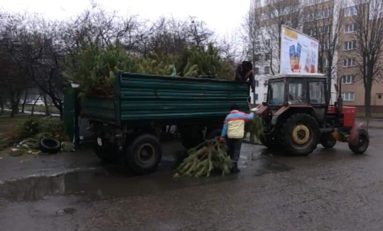 У Рівному новорічні дерева перероблюють на щепу
