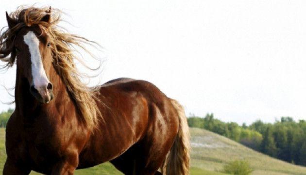 На Рівненщині кінь задушив батька дев'яти дітей