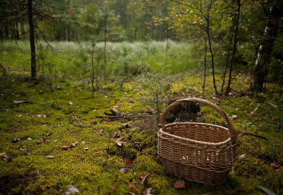 На Рівненщині бригада «швидкої» надала медичну допомогу 91-річній жінці, яку знайшли в лісі